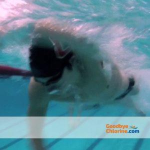 Swimmers Soap Six Bars Remove Chlorine by Goodbye Chlorine